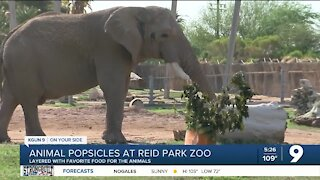 Reid Park Zoo makes popsicles for zoo animals during summer months