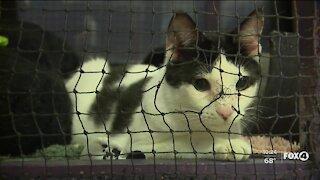 Gulf Coast Humane Society looks forward to Giving Tuesday