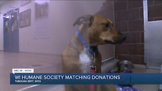 IN DEPTH: WI Humane Society matching donations