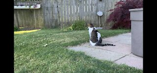 cat contemplates life decisions