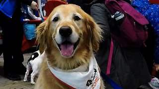 Therapy dogs have a new and wonderful job