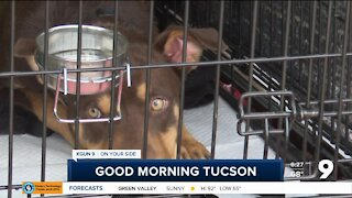 Tucson animal rescue looking in other states for fosters, adopters