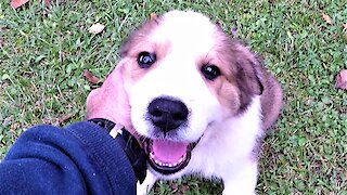 This adorable puppy loves nothing more than a chin scratch
