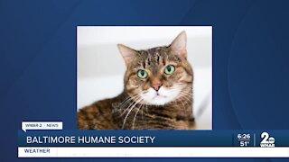 "Baltimore Humane Society says, ""Good morning Maryland!"""