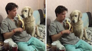 "Golden Retriever hilariously ""sneaks"" a bite of a banana"
