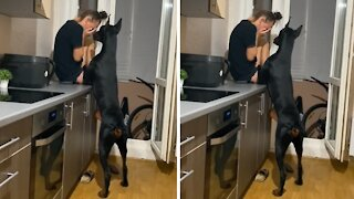 Doberman instantly comforts owner when she starts crying