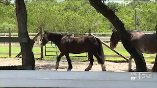 New horse therapy program helps people suffering from anxiety, especially due to COVID-19