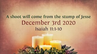 A shoot will come from the stump of Jesse - Advent Devotional 3rd Dec '20