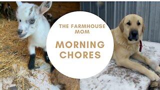 Goat Farm Morning Chores