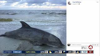 Dead dolphin found on Fort Myers Beach
