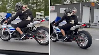 Fearless dog rides motorcycle with her owner