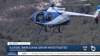 Illegal marijuana grow investigated
