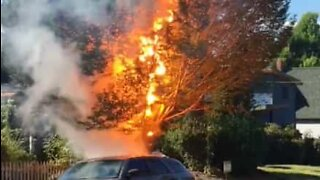Power line causes explosion and sets tree on fire