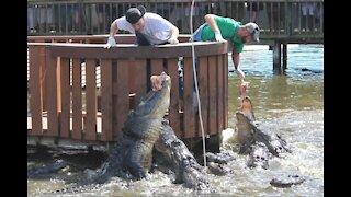 Gatorland Orlando Florida
