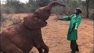 Babyelefant danser med dyrevokter i Kenya