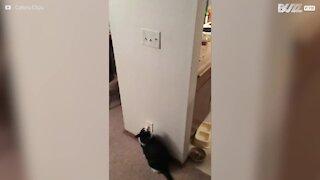 Les interrupteurs n'ont pas de secret pour ce chat!