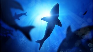 9 Great White Sharks Spotted Off Cape Cod Coast