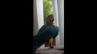 Parrot's best friend is a sweet