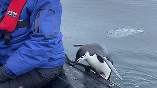 Penguin in Antarctica leaps into passing boat