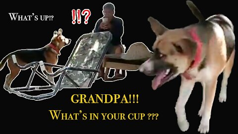 Confused Dog. What's in your cup, Grandpa!???