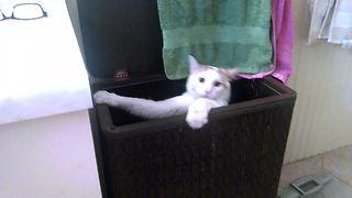Hilarious Cat Jumps Into Laundry Basket