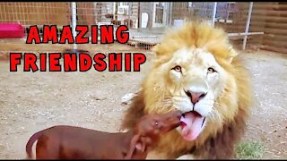 Funny animals Watch Until The End! Don't Mess With These Pets