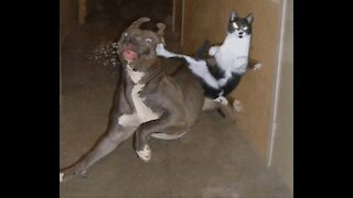 cats, dogs, dogs vs cats UFS