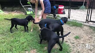 Online fundraiser to help 'House of Hope' animal rescue
