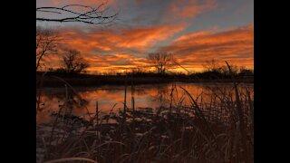 Merino Morning Duck Hunt