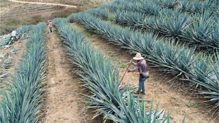 Surprising Facts You May Not Know About Tequila