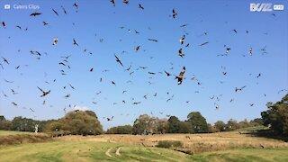 Un gigantesco stormo di uccelli vola libero nel cielo