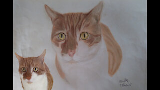 Drawing Head Cat Colored.