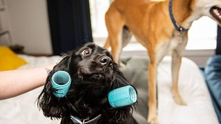 Top Dog – Five Star Hotel Introduces Spa Treatments For Posh Pooches