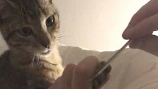 Cat relaxes while getting a manicure