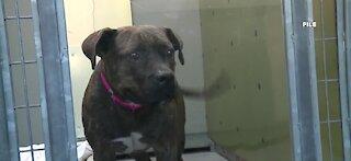 Animal Foundation in Las Vegas waiving certain pet adoption fees during 'tailgate'