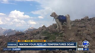 Watch your pets as temperatures soar
