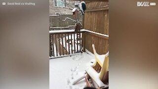 Ce chat adore les batailles de boules de neige