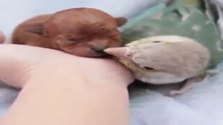 PUPPY AND BIRD LOVE STORY