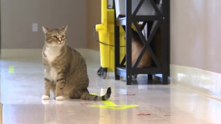 Twin Falls Animal Shelter sees changes in pet adoptions