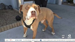 Pet of the week: 1-year-old named Louis is friendly, crate trainedL