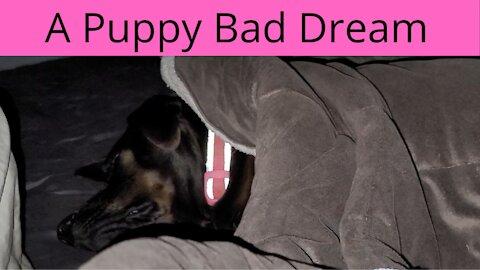 A puppy having a little bad dream