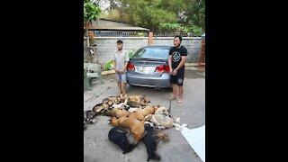 Dog cop agent