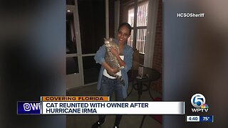 Florida cat reunited with owner 2 years after Hurricane Irma
