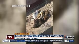 Birds brutally killed at community garden
