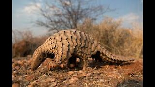 Amazing Animals,Unbelievable Animal Video Compilation