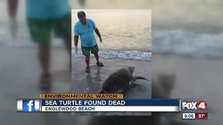 Sea turtle found dead on beach shore