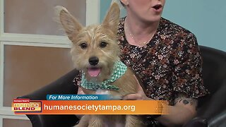 Humane Society of Tampa Bay | Morning Blend
