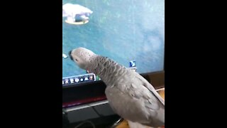 Gamer parrot really wants to be part of the action