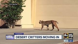 Desert critters popping up along with the summer heat