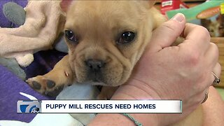 Puppy mill rescues need home
